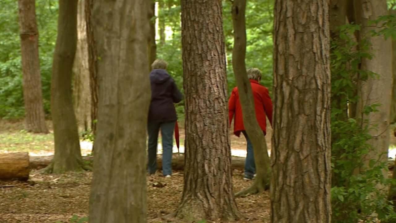 Teden gozdov že 50. zapored