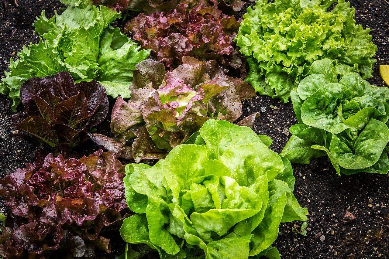 Presežki zelenjave zaradi samooskrbe