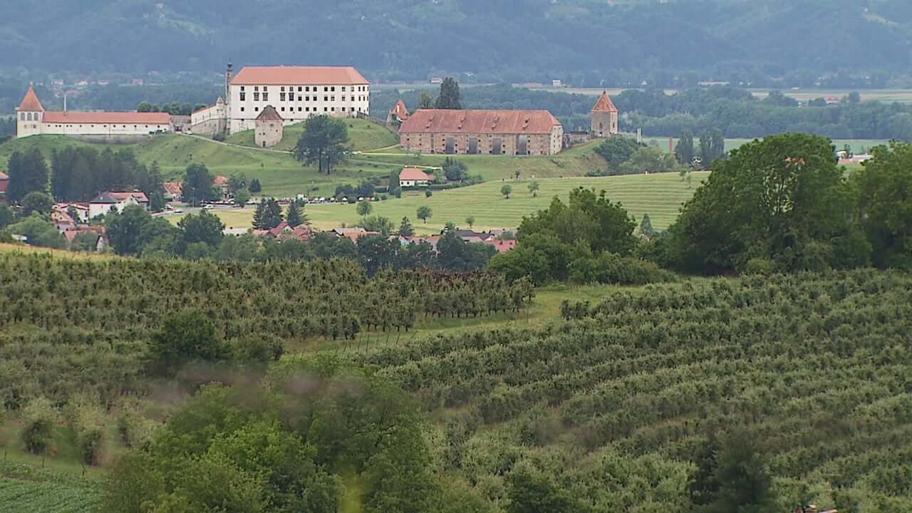 Zgodovina vinogradništva na Ptuju zajeta v zborniku
