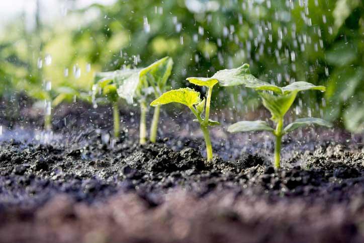 Predavanje – Gojenje vrtnin v vremenskih razmerah 2018