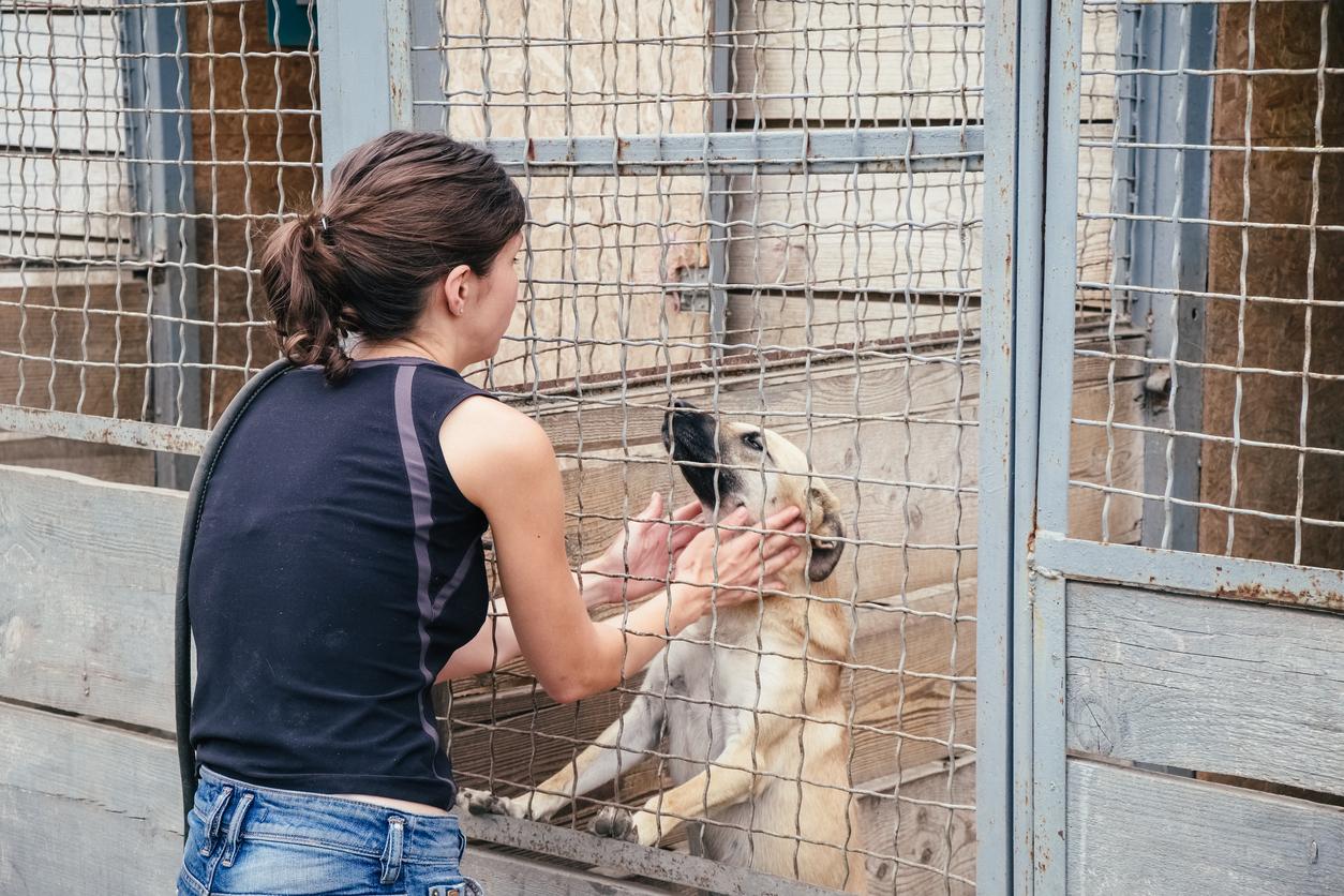 V ponedeljek se ponovno odpira zavetišče za zapuščene živali