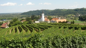 V Halozah najbolj moderna polnilnica za vino
