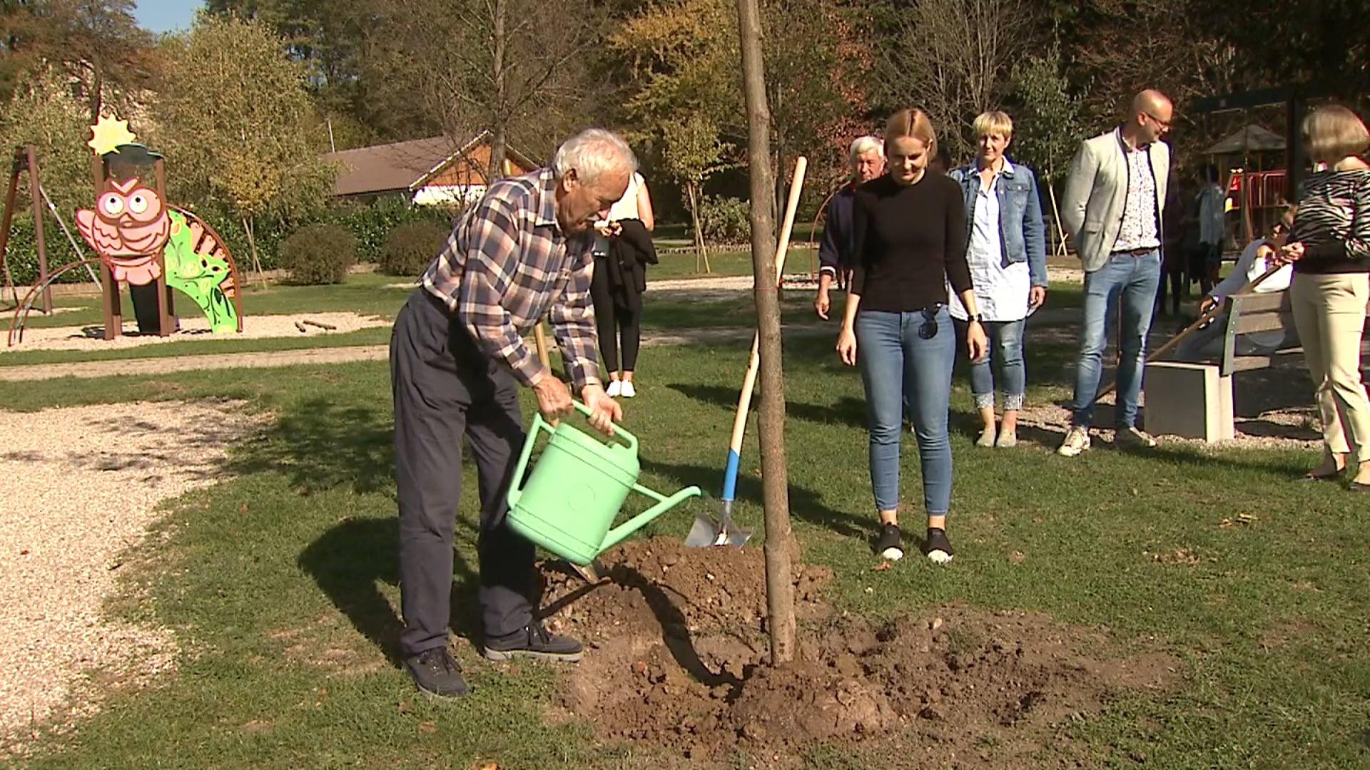 Na Ptuju zasadili nova drevesa