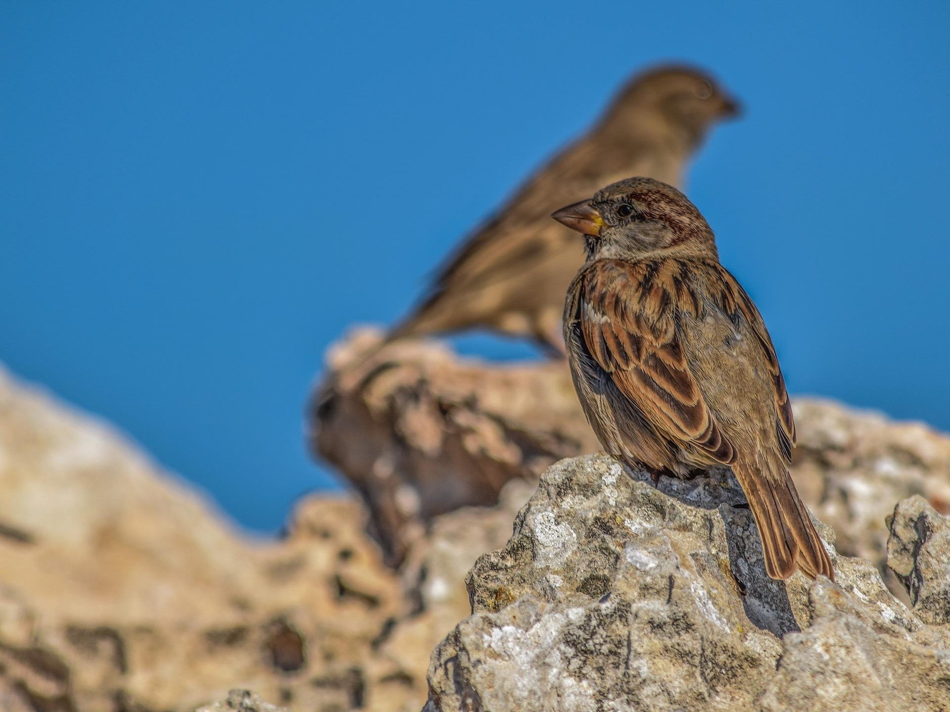 Prihodnji teden akcija Ptice okoli nas