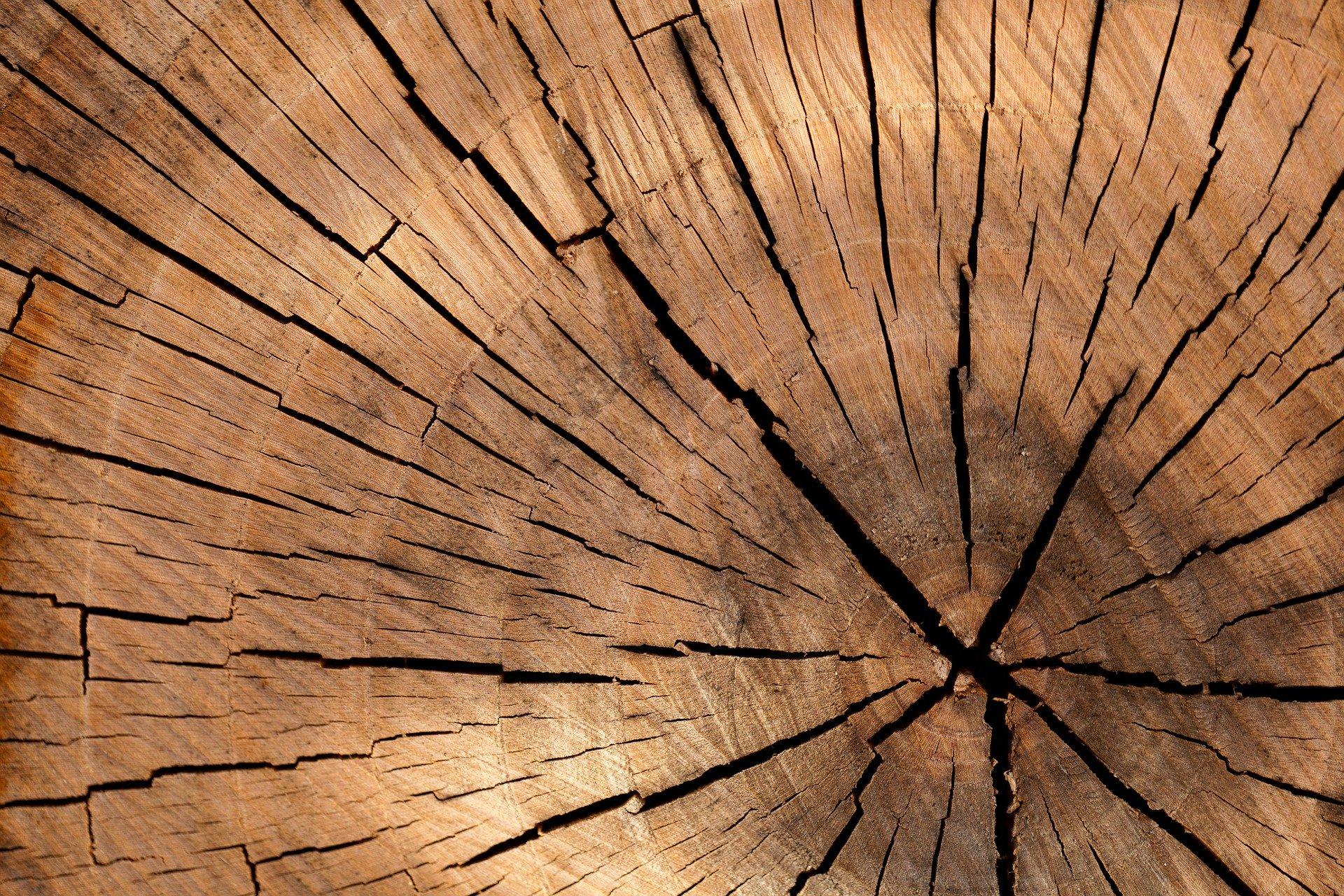 Les in izdelki iz lesa v Europarku Maribor
