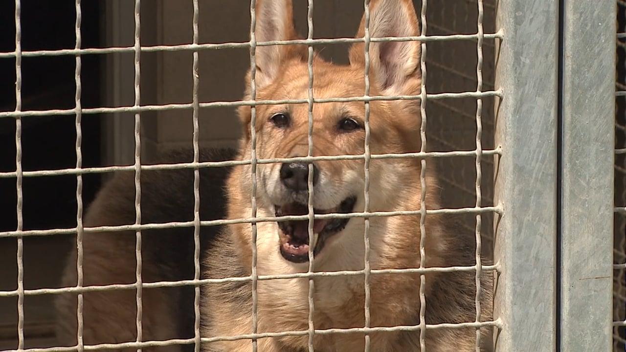 Zavetišče za živali Maribor ponovno odpira svoja vrata