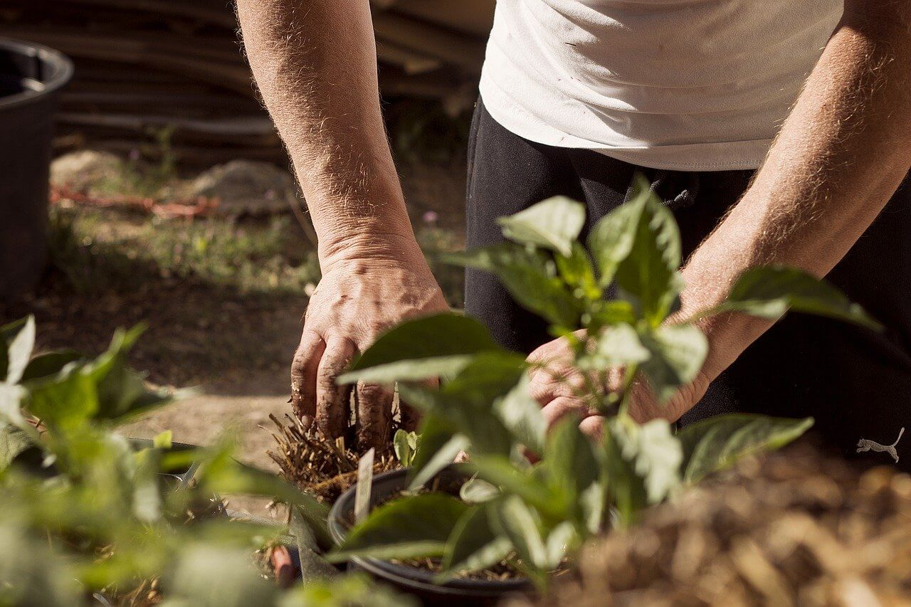 Poletje je čas za vrtnarjenje